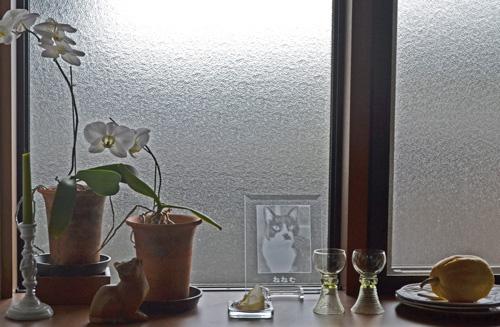 窓辺のネネム.jpg